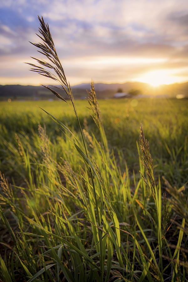 Meadow Photograph - Meadow Light by Chad Dutson