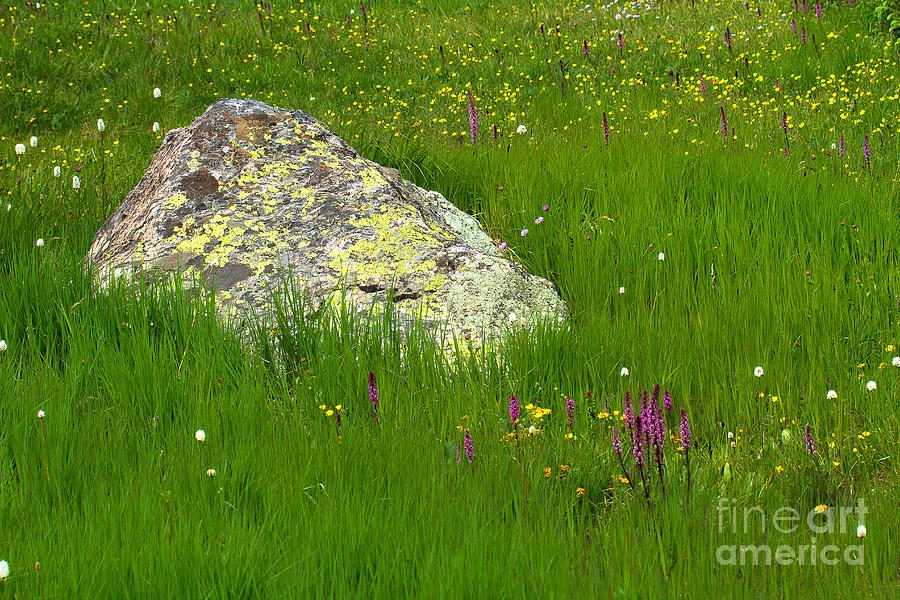 CloverClan Camp Meadow-rock-jim-garrison