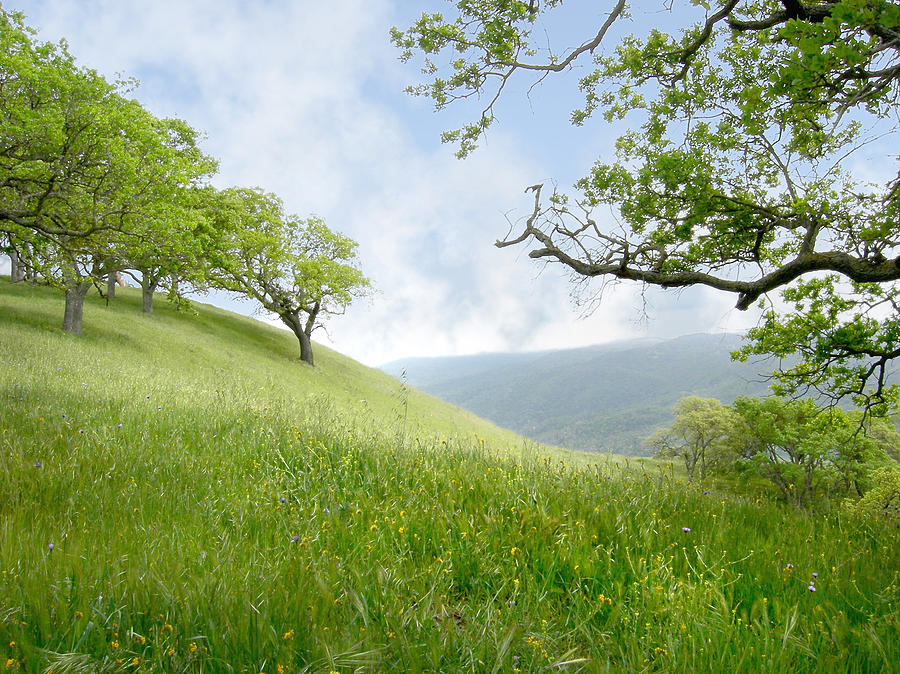 Landscape Photograph - Meadow View Spring by Karen  W Meyer