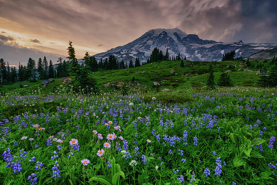 Meadows of Heaven by Dan Mihai