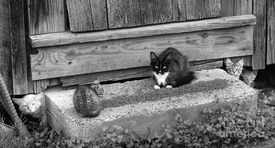 Cats Photograph - Meal Time by Pete Hellmann