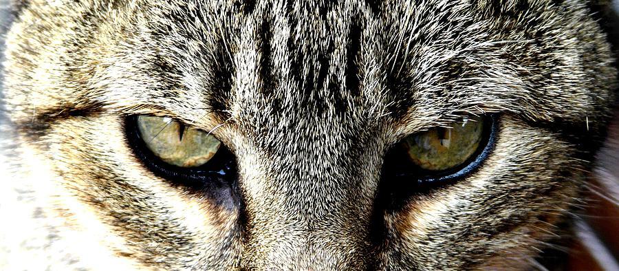 Cat Photograph - Me...dangerous...never. by Valerie Ornstein