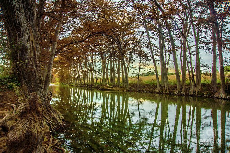 Medina Cypress Reflection by Michael Tidwell