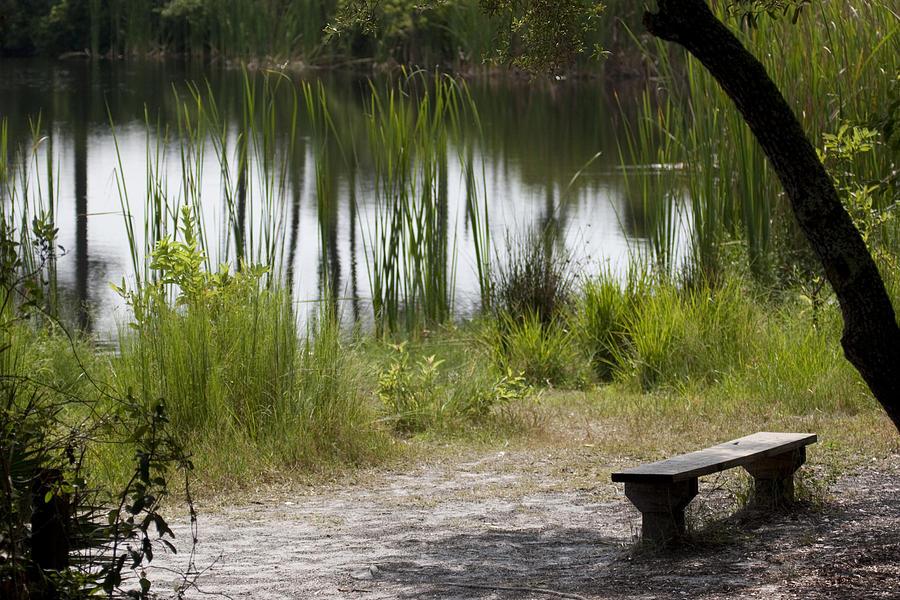 Pond Photograph - Meditation Spot By A Pond by Tina B Hamilton