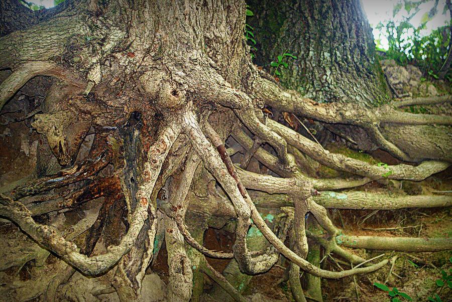 Tree Photograph - Medusa by Cricket Hackmann