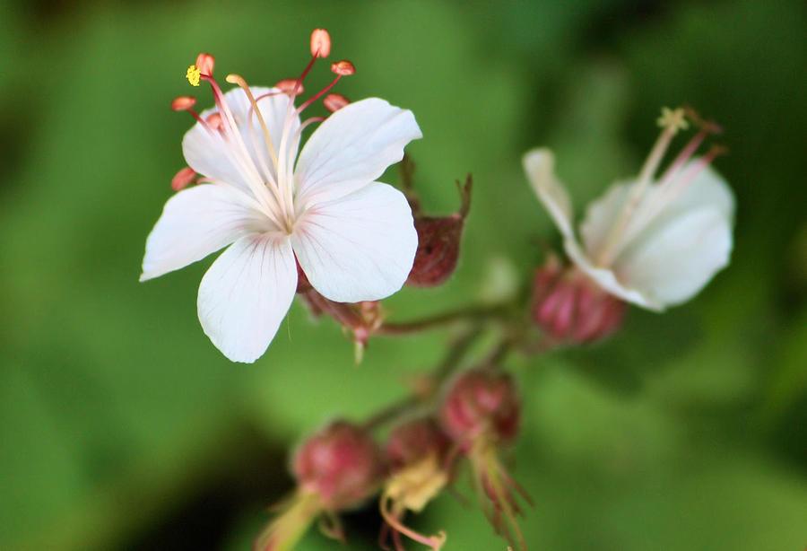 Flower Photograph - Medusa Flower by Karen Scovill
