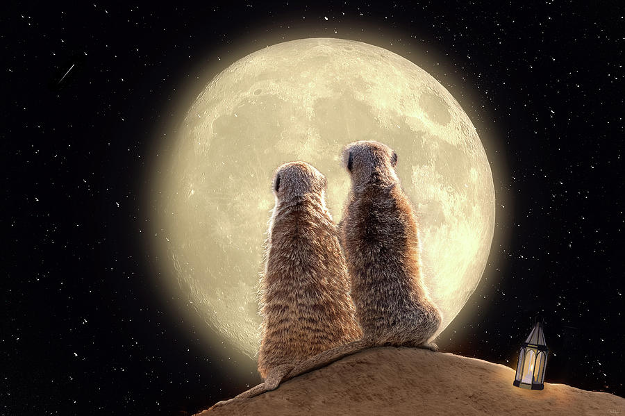 Meerkat Moon by Nicole Wilde