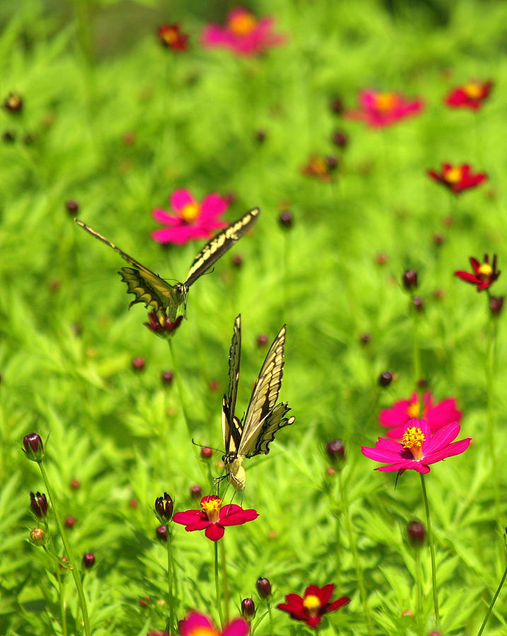 Meeting By Flower Photograph by Bruce Raynor