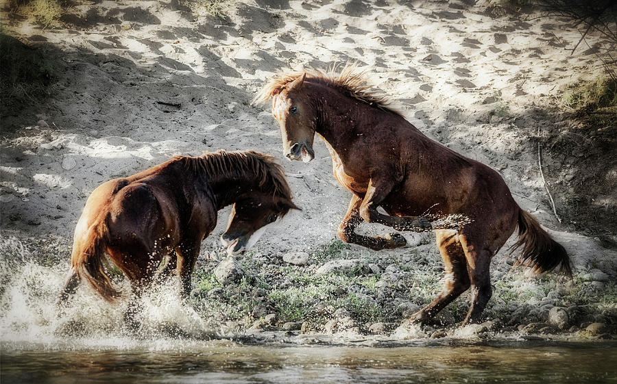 Wild Horses Photograph - Meeting On The River  by Saija Lehtonen