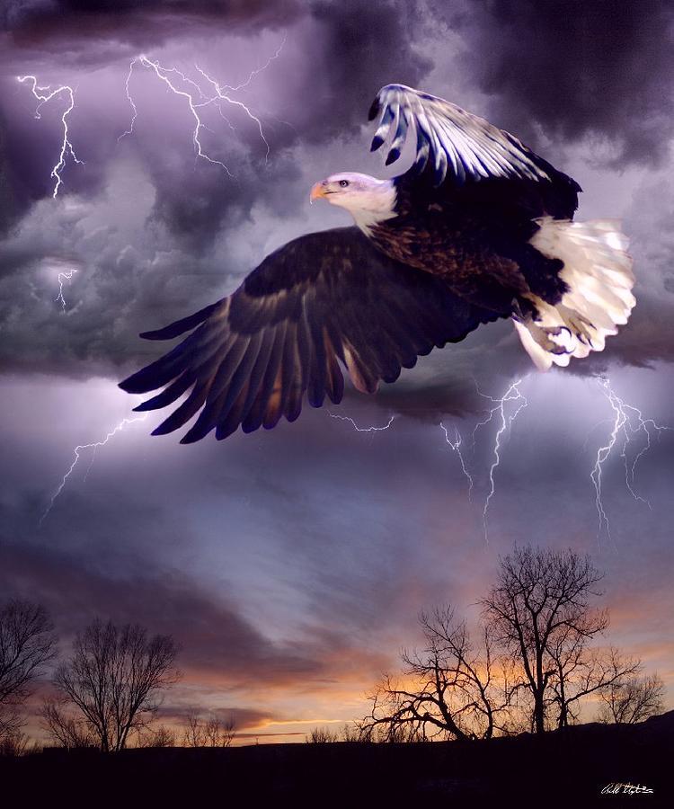 Eagles Digital Art - Meeting The Storm by Bill Stephens