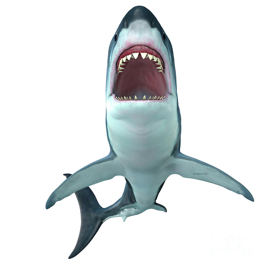 affc46e9c6 Megalodon Shark Front Profile Digital Art by Corey Ford