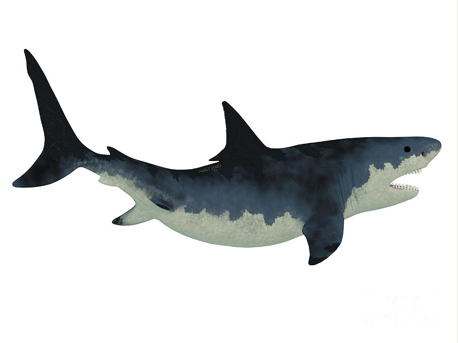 Megalodon Shark Over White Painting by Corey Ford