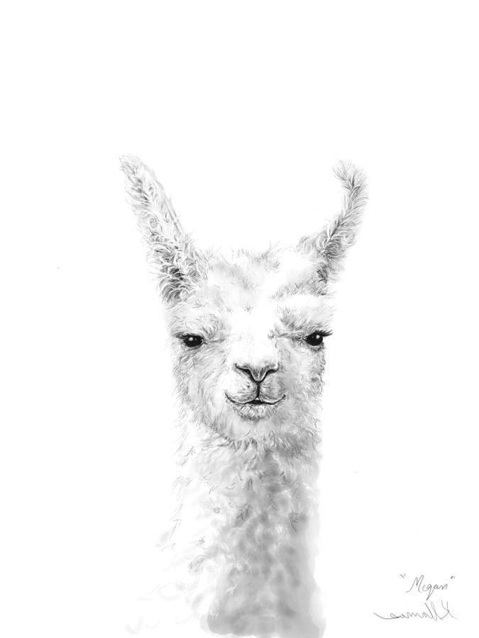 Llamas Drawing - Megan by K Llamas