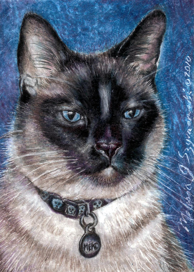 Siamese Drawing - Meko by Melissa J Szymanski