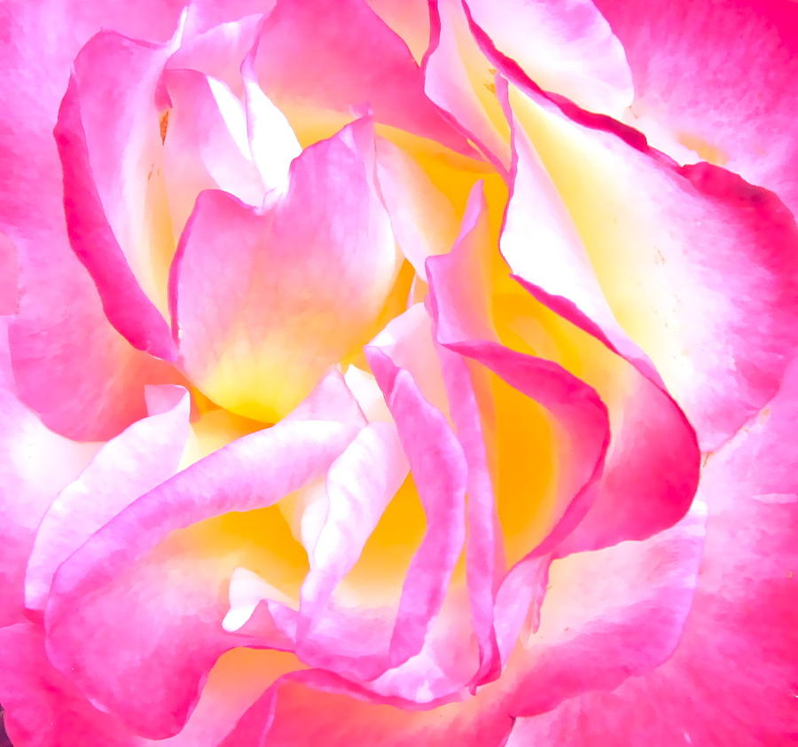 Photograph Of Rose Photograph - Mel by Gwyn Newcombe
