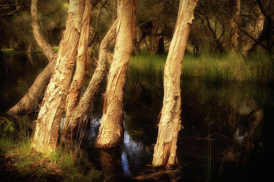 Australia Photograph - Melaleuca Magic by Louise Cooke