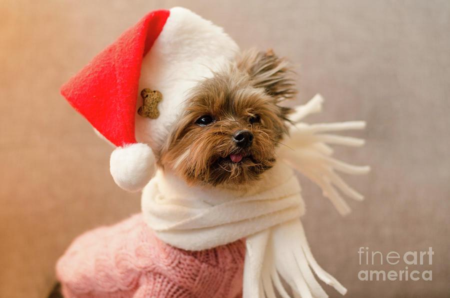 Melanie in Christmas Hat by Irina ArchAngelSkaya