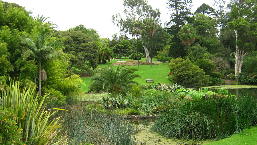 Melbourne Botanical Gardens Photograph by Emma Frost