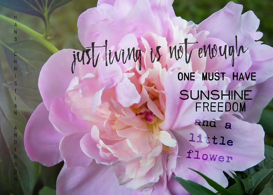 Dahlia Photograph - Melissas Flower Quote by JAMART Photography