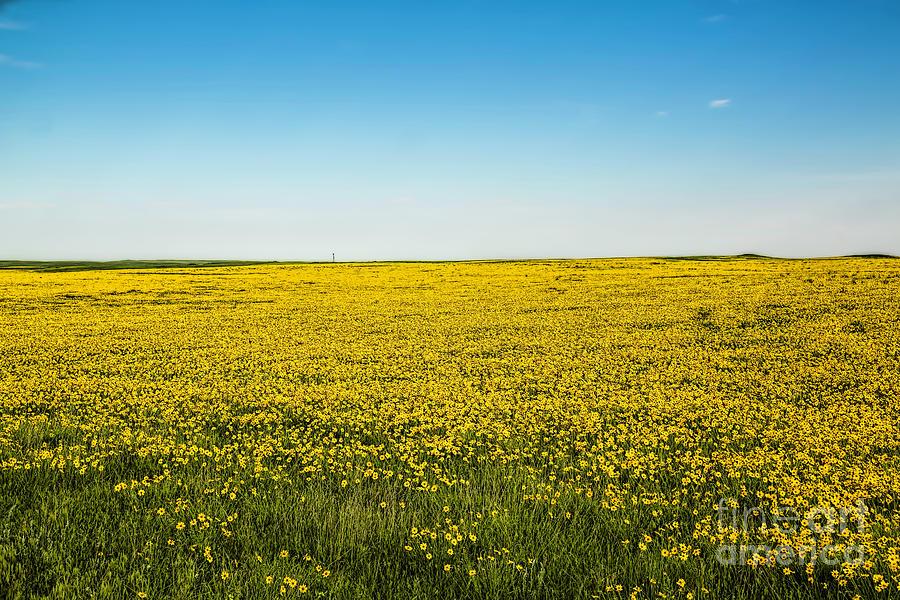 Mello Yellow Photograph - Mello Yellow by Jon Burch Photography
