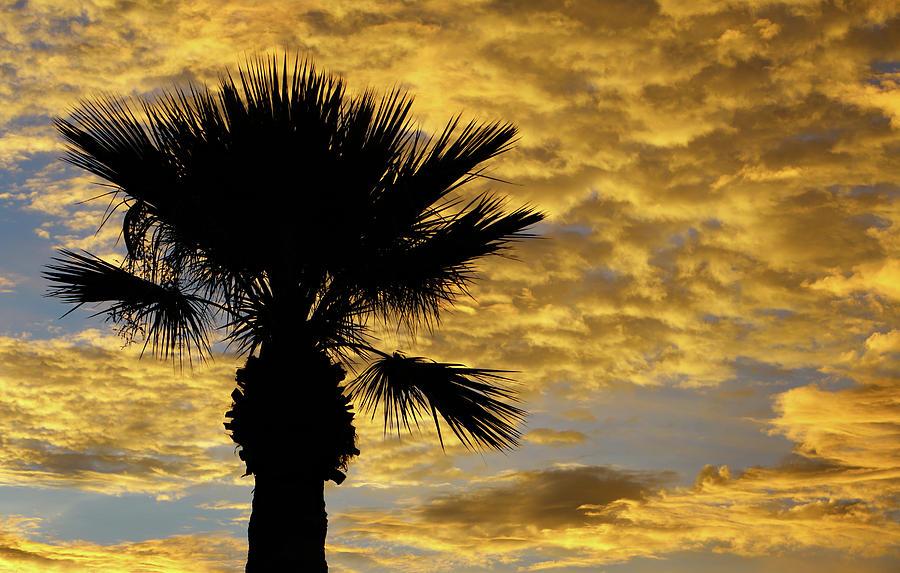 Mellow Yellow Sunset by ELAINE MALOTT