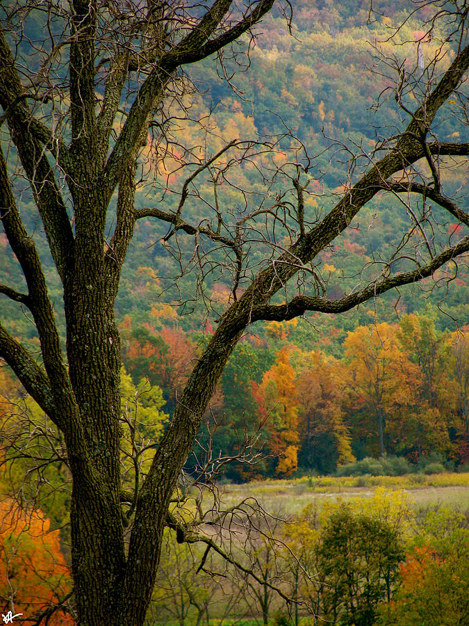 Melody Of Autumn Ii Photograph - Melody Of Autumn II by Debra     Vatalaro
