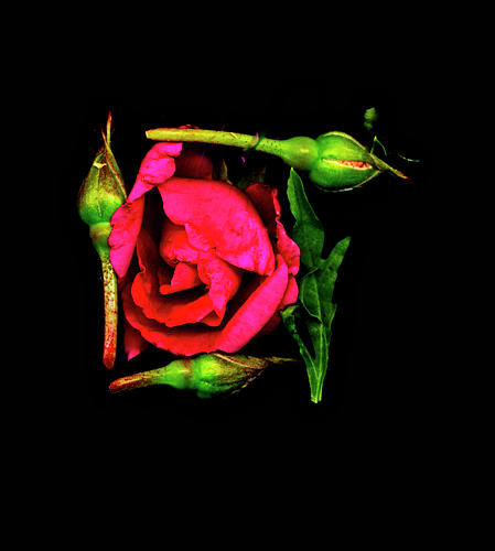 Mem - Last Hebrew Letter In Shalom Digital Art by Sterling Haidt