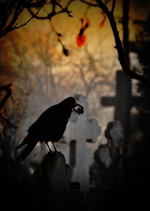 Raven Photograph - Memento Mori by Cristian Andreescu