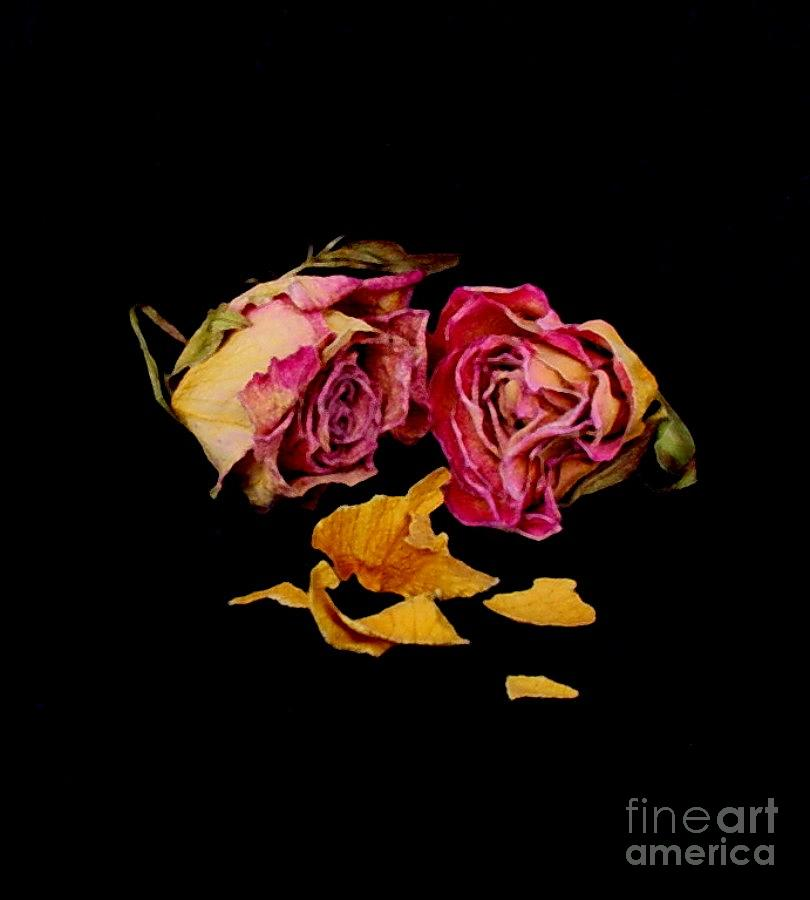 Floral Photograph - Memories by Fred Wilson