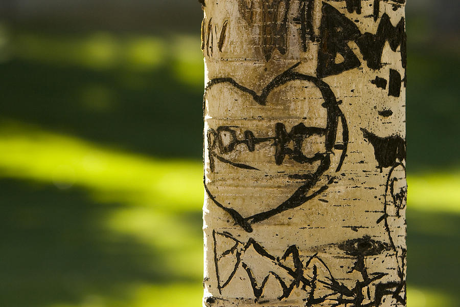 Carvings Photograph - Memories In The Aspen Tree by James BO  Insogna