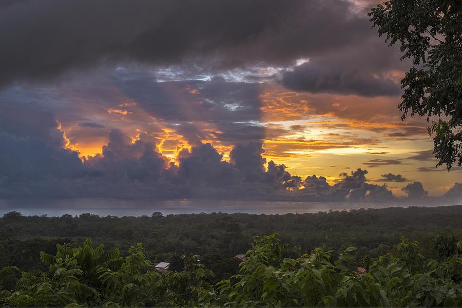 Costa Rica Photograph - Memories Of Matapalo by Jeremy Jensen