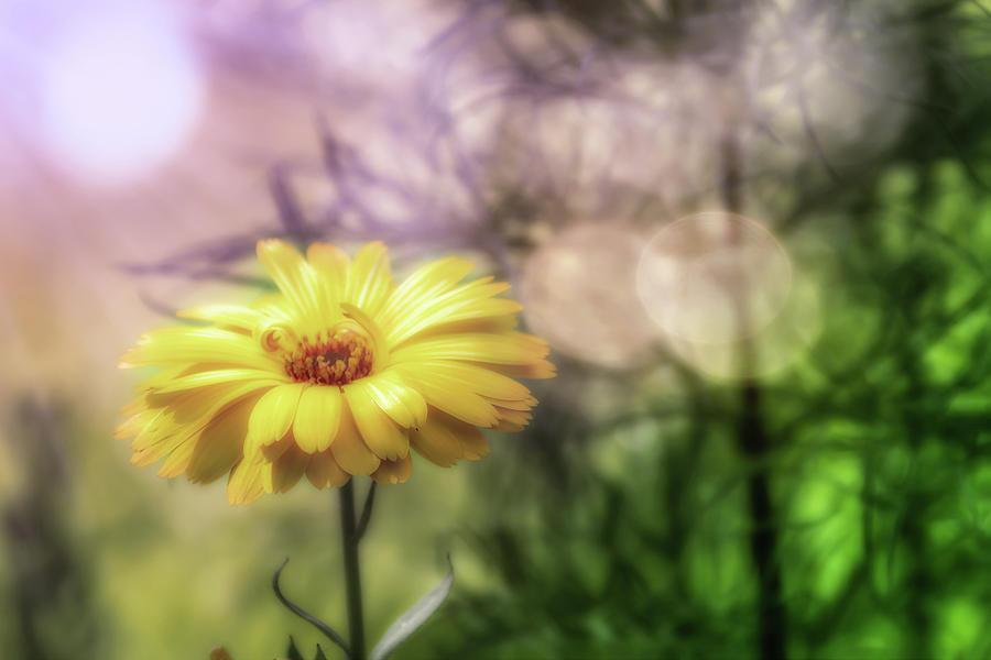 Marigold Photograph - Memories Of Summer by Richard Sayer