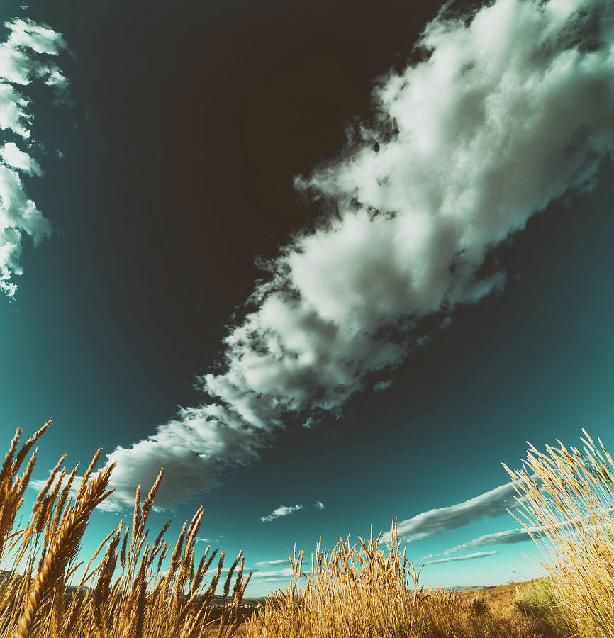Menacing Sky Over Fields Of Gold With Large Summer Cloud System Photograph
