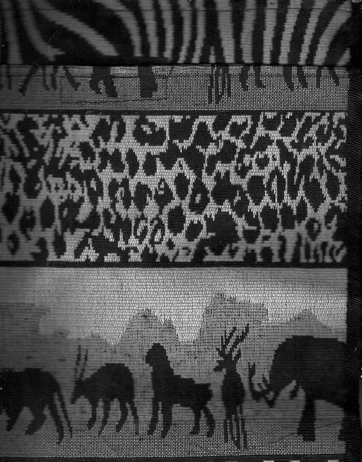 Zebras Photograph - Menagerie Parade  by Anne-Elizabeth Whiteway