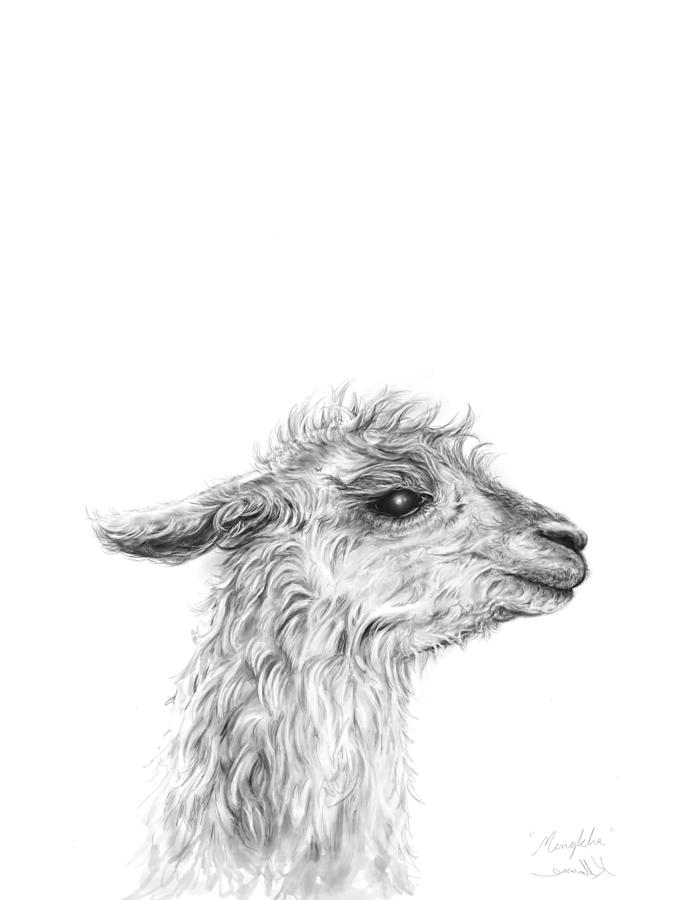 Llamas Drawing - Mengkha by K Llamas