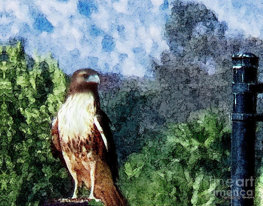 Menifee Falcon by Rhonda Strickland