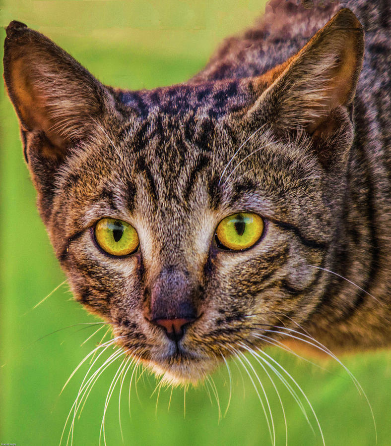 Cat Photograph - Meow Means Woof In Cat by Manjot Singh Sachdeva