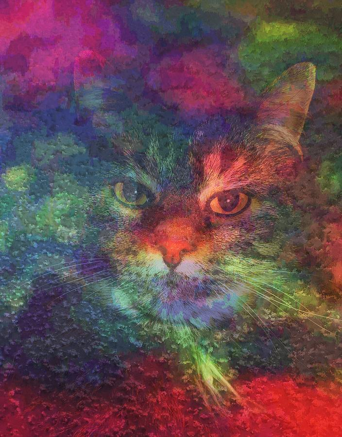 Meow Meow-a Maine Coon Cat Mixed Media