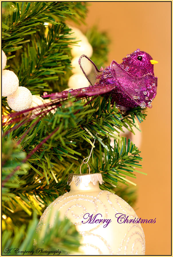 Christmas Card Photograph - Merry Christmas by Angela Comperry