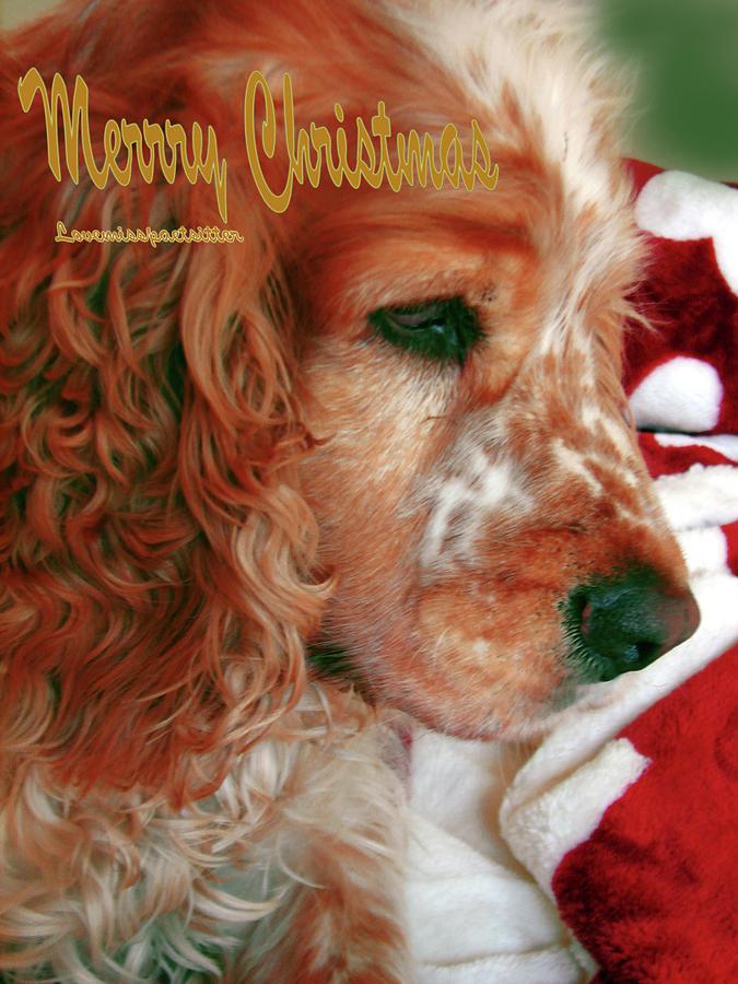 Art Gallery Online Digital Art - Merry Christmas Art 29 by Miss Pet Sitter