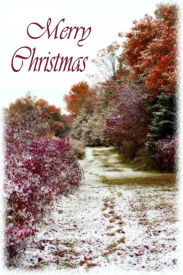 Snow Photograph - Merry Christmas Colours And Snow by Cathy Beharriell