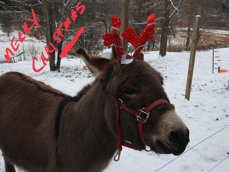 merry christmas photograph merry christmas from dominick the donkey by kenneth summers