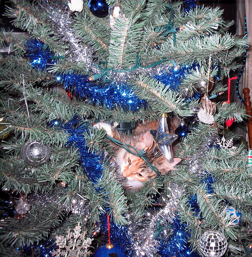 Pets Photograph - Merry Christmas Kitty by CGHepburn Scenic Photos