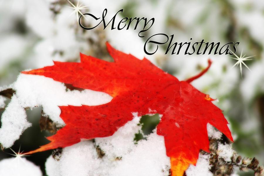 Christmas Card Photograph - Merry Christmas Leaf by Cathy Beharriell