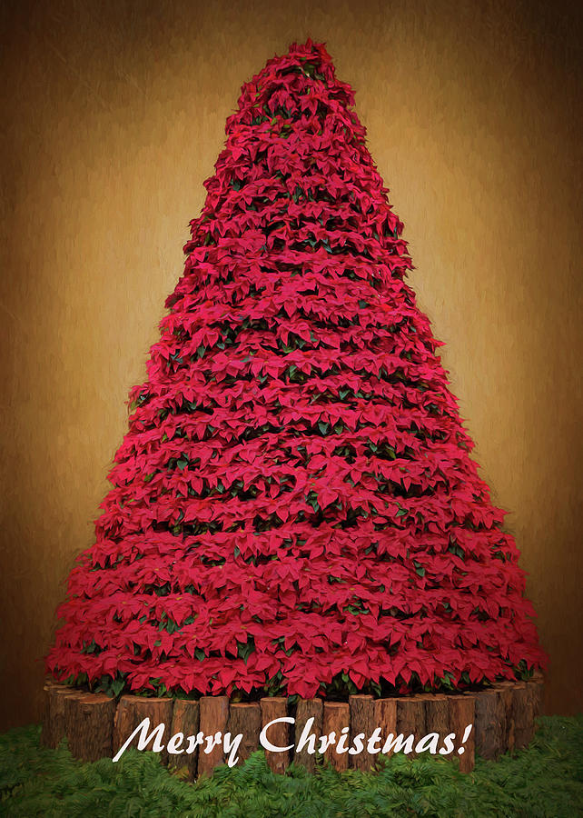 Merry Christmas - Poinsettia Tree by Susan Rissi Tregoning