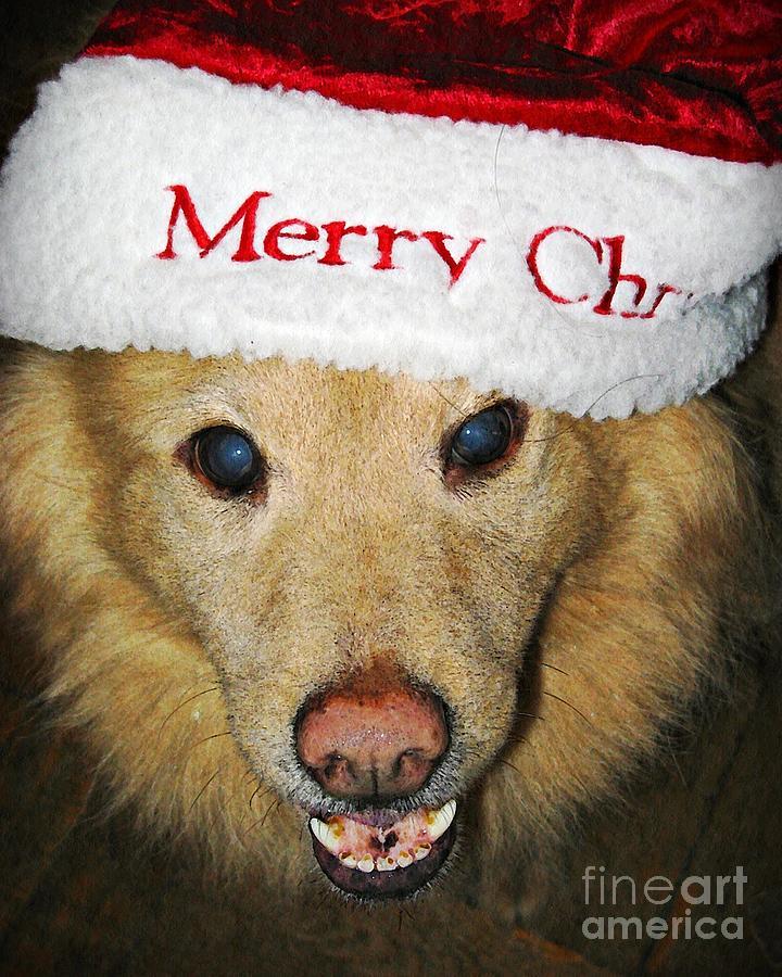 Dog Photograph - Merry Christmas by Sarah Loft