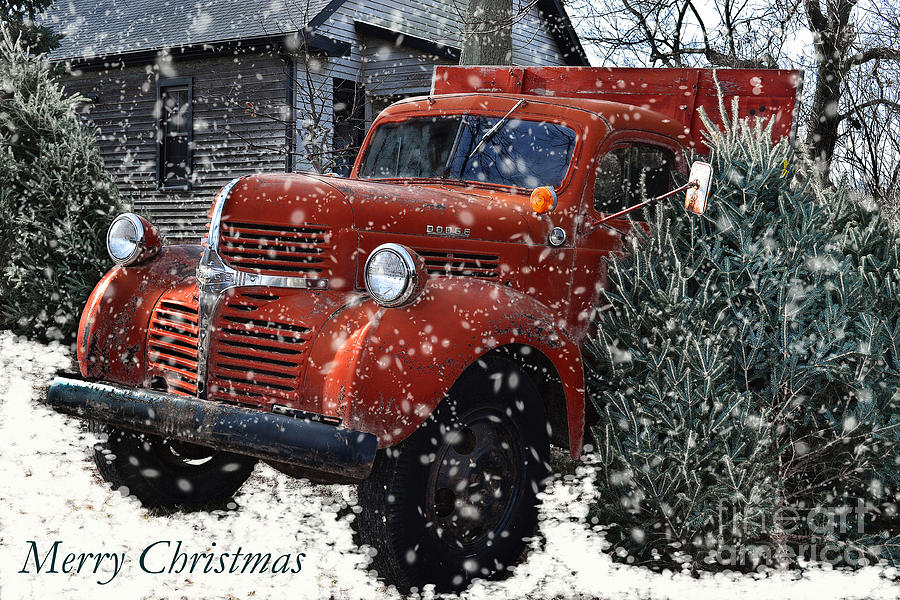 christmas trees photograph merry country christmas by amy lucid - Country Christmas Images