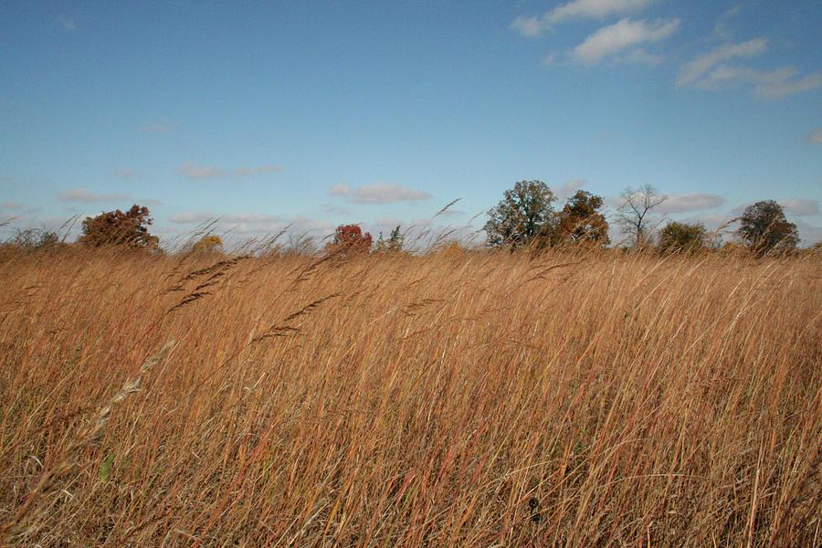 Unique Photograph - Merwin Prairie Autumn II by Dylan Punke