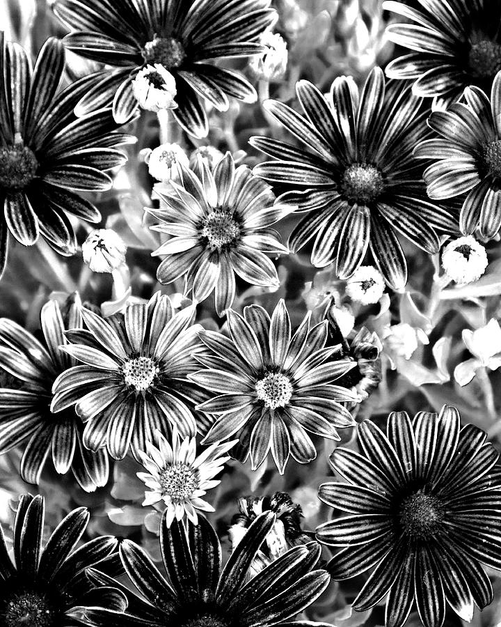 Bw Photograph - Metal Petals by Lana Trussell