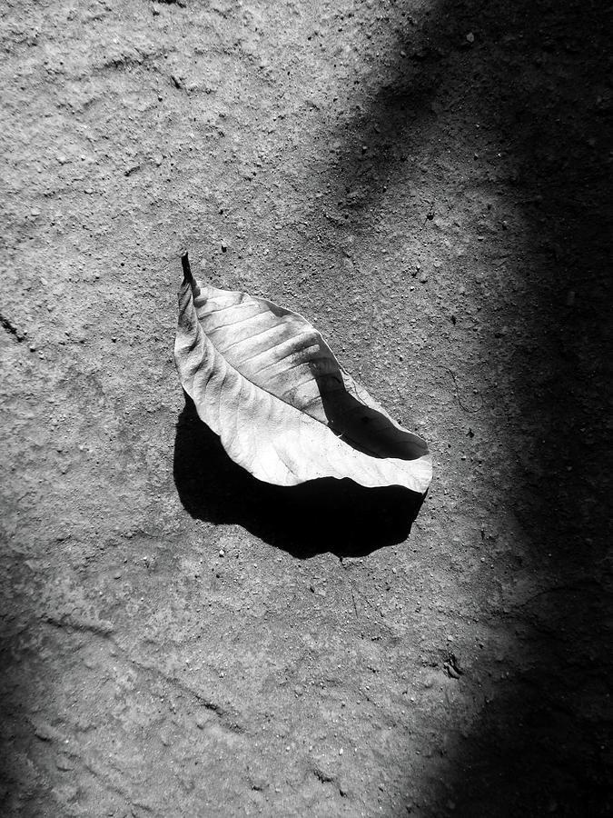 Metamorphosis Photograph